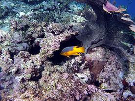 Il reef: Isole Grenadine, Caraibi